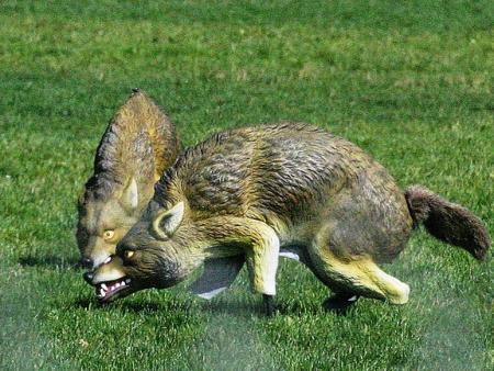 Coyote Fake