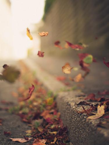 leaves blowing