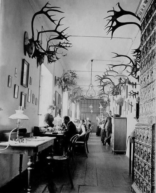 office open antlers