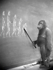 teaching ape