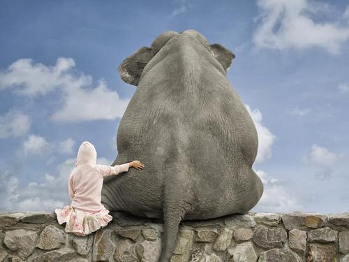 compete elephant