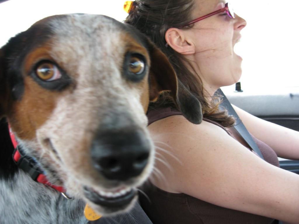 singingin-the-car dog