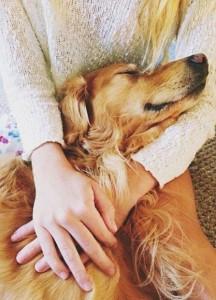 dog hug happy