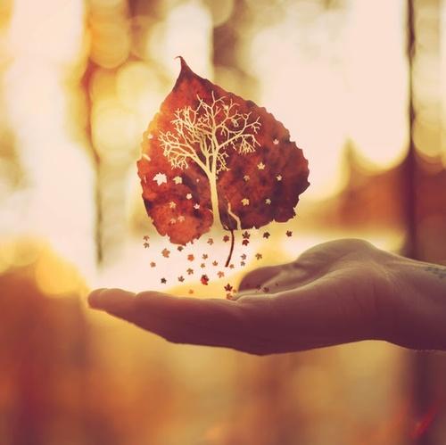 autumn-second-spring